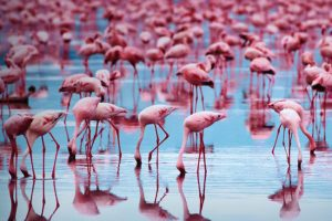 Visit some of the last existing wild Flamingo colonies in the world!