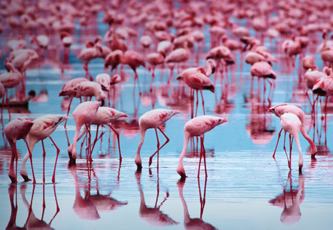 Visit some of the last wild existing Flamingo colonies in the world