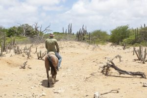 Go horse riding in the beautiful nature of Bonaire